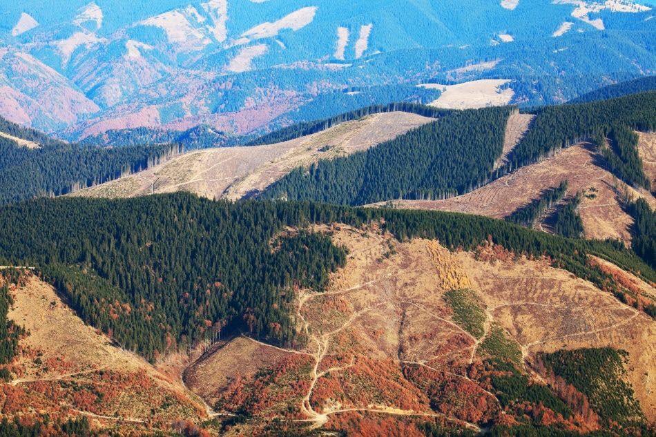 ГПУ опубликовала доказательства хищения чиновниками земель бучанского леса и аграрного университета - Цензор.НЕТ 4626