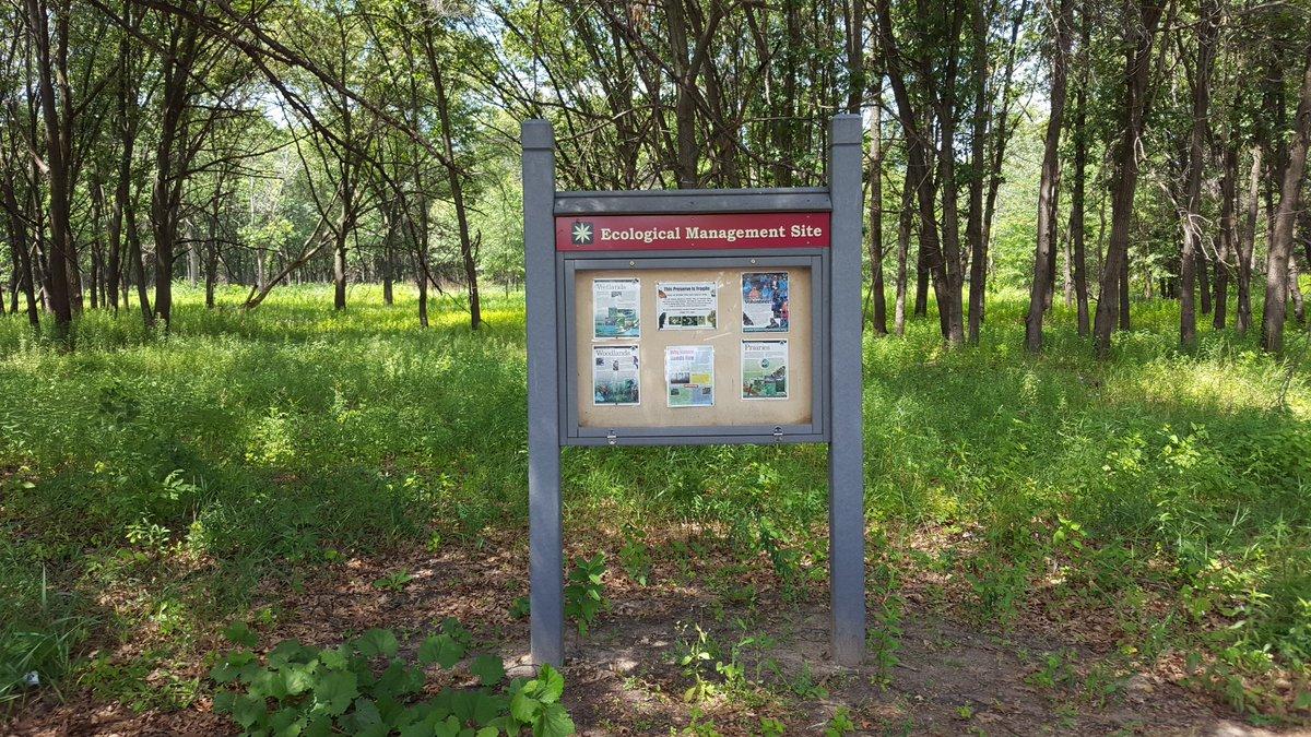 Restoring rare oak savanna #ecosystems.  @FPDCC Jurgenson Woods #Illinois @ToniPreckwinkle #environment #wildlife