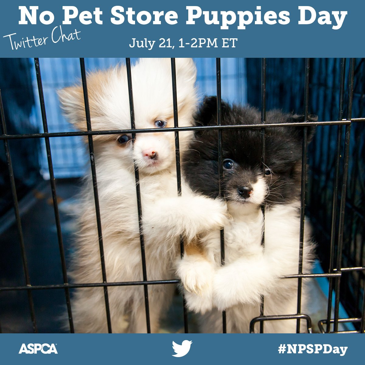 no pet store puppies day is july 21 rsvp now join us 7 21 from 1 2pm et for our no pet store