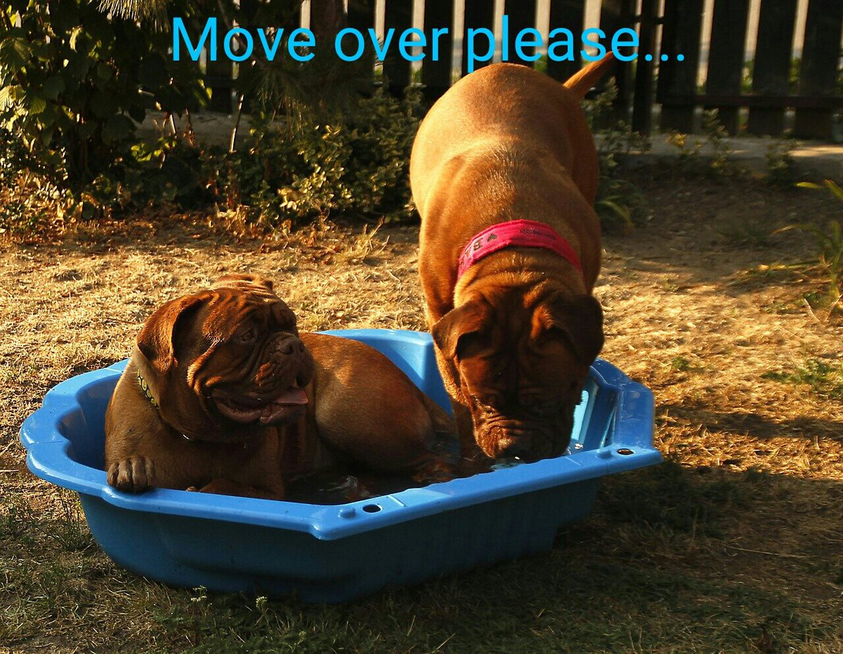 Trying to beat the heat! #keepingcool #poolweather #dogsoftwitter<br>http://pic.twitter.com/3kpWVEiDFP