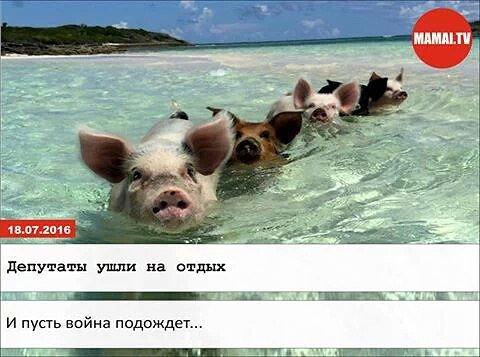 """Счастливый тарифчик, специалисты по анализам, украинская готика. Свежие ФОТОжабы от """"Цензор.НЕТ"""" - Цензор.НЕТ 5111"""