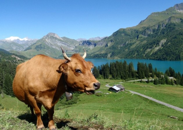 And one of Lake Annecy  especially for @lesvachesdutour  #TDF2016 https://t.co/3qaxCh0ggn
