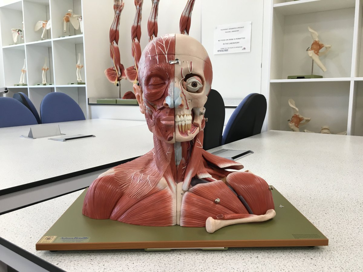 Brand new out of the box, literally, this anatomy model can't wait for September. https://t.co/gcSYzpGUZK