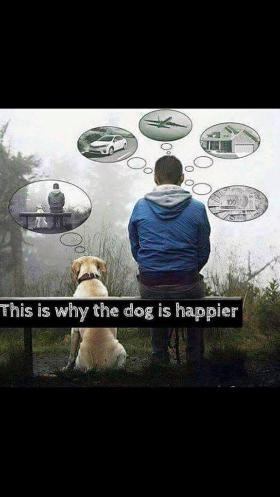 Very true. Totally agree.... This Is Why the Dog is Happier.  #Mindfulness on FB https://t.co/402ZzQmVfb