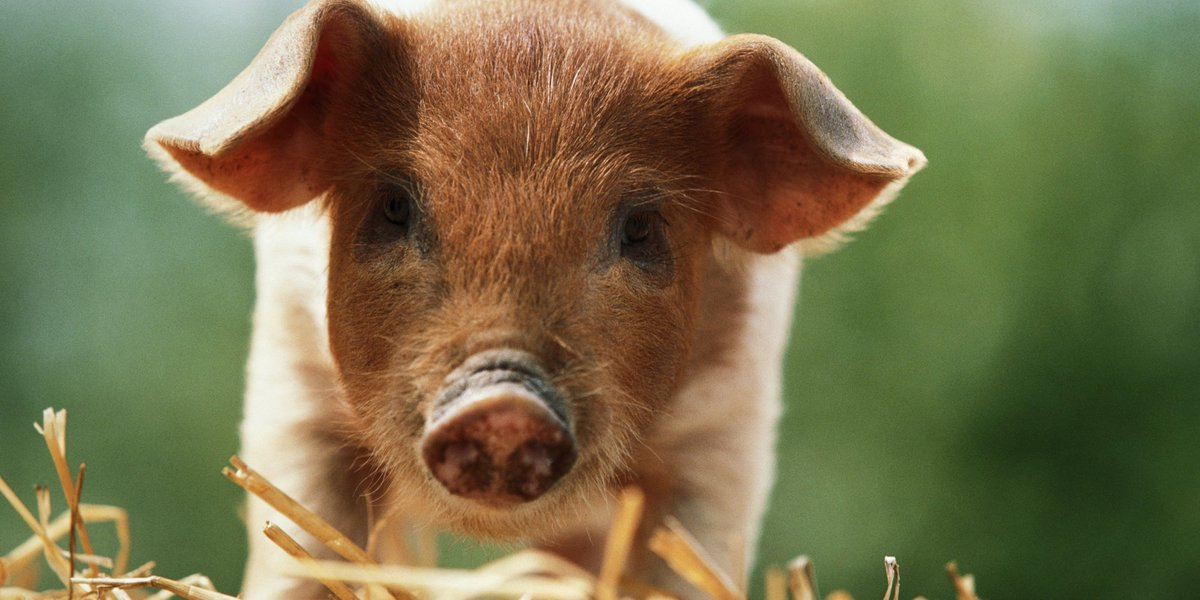 how we treat the animals we eat essay 25 quotes about animals that will make you a better human buzzfeed staff share on facebook we are called to treat them with kindness.