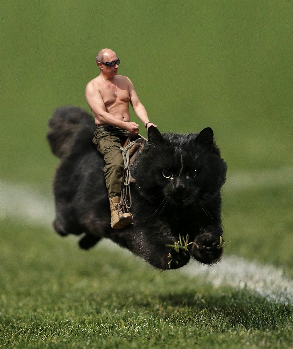 From Twitter accounts to Reddit, the Pepper Stadium Cat has officially gone viral (Photo: Reddit) #NRLPanthersSharks https://t.co/NPS8lY65rQ