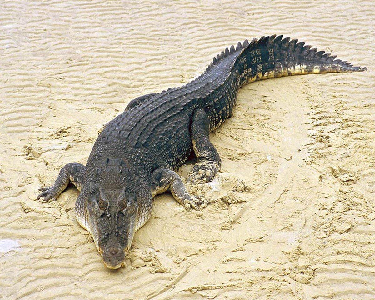 удалось чем отличается крокодил от аллигатора фото наличии