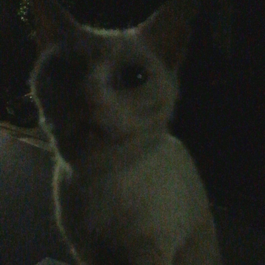 稽古帰り、神奈川区で白い迷い猫です。水とエサをあげました。いま玄関先で寝てます。かなり人なっこいので飼われていた猫だと思います。拡散お願いします。 https://t.co/UZjAPMT9ih