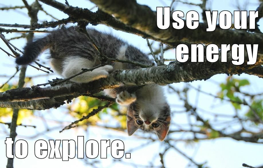This #growthmindset cat is ready to learn all about #OU2Canvas: Use your energy to EXPLORE. https://t.co/SKk755mBJD https://t.co/Ldr2YATX1p