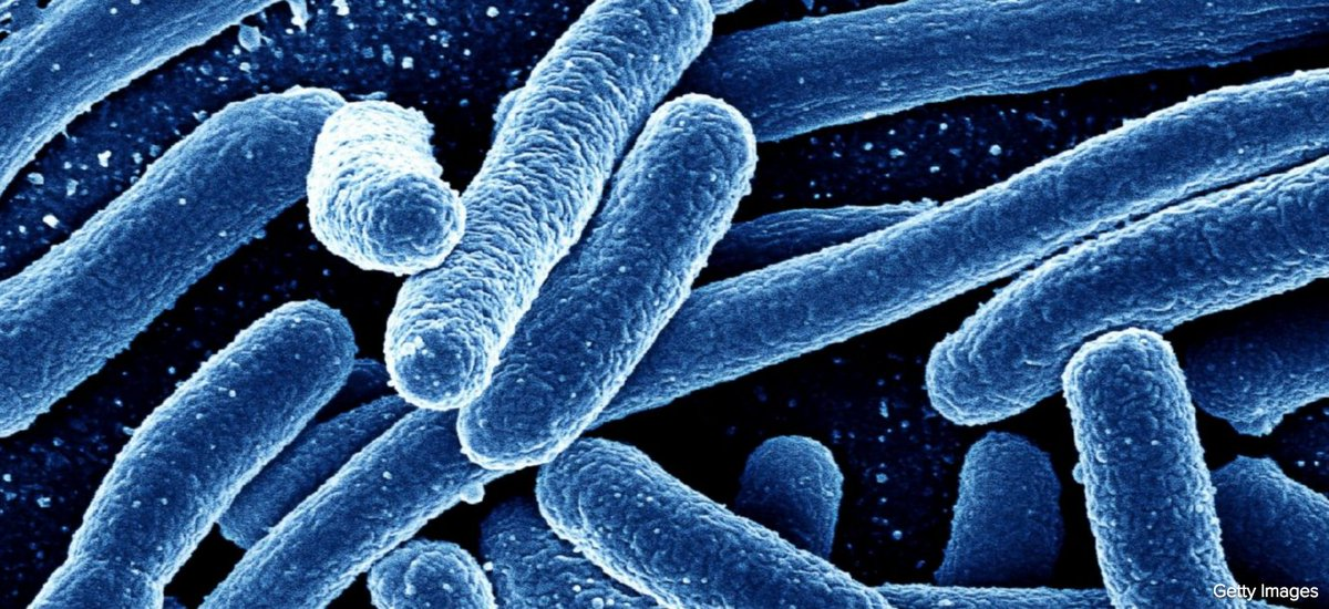 breaking the code of the e coli bacteria But as a first step, the team has managed to trick e coli, a bacteria found in  fuel  from algae involve breaking open their cells and, in doing so,.