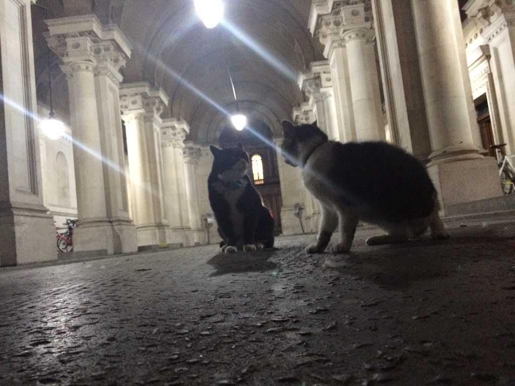 Fierce reshuffle fight news - Larry + Palmerston in face off just in arch btw Number 10 in foreign office tonight https://t.co/w5MqAtLN29
