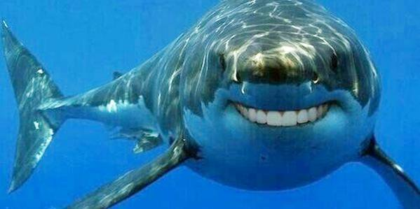 Sharks with human teeth are less scary https://t.co/9yxm6V0xJC