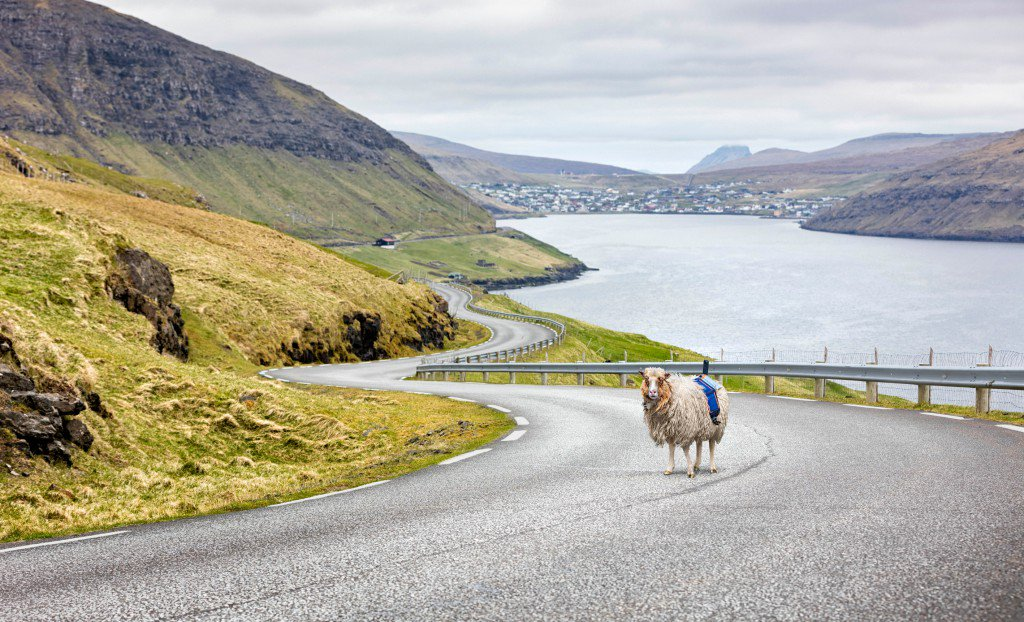 Faroe Islanders are fed up with not having Google Street View so they strapped cams to sheep https://t.co/tgQhoW1INr https://t.co/sLwUnwXbwD