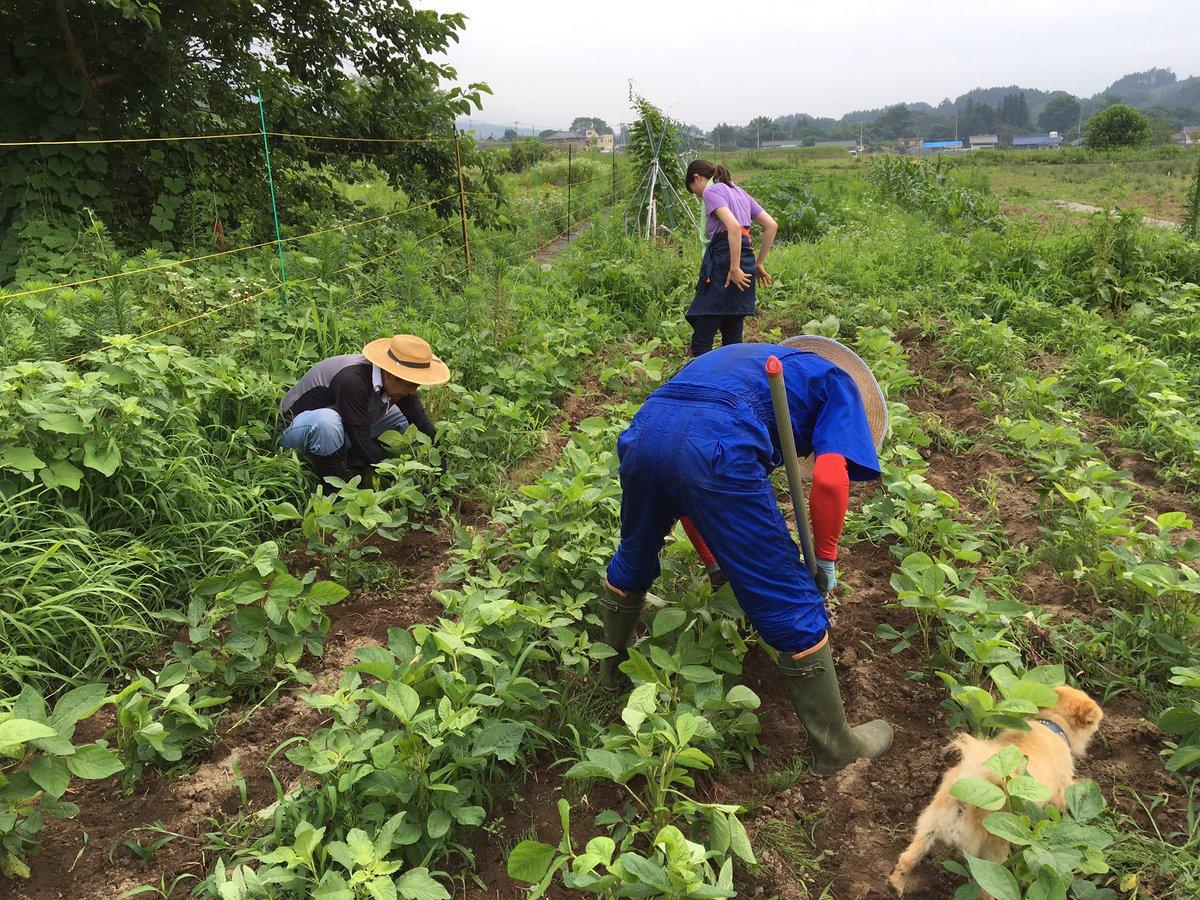 今朝はお菓子の材料畑で草取りをしていましたが、サボって穴を掘ってばかりの社員がいたので厳重注意をしておきました。