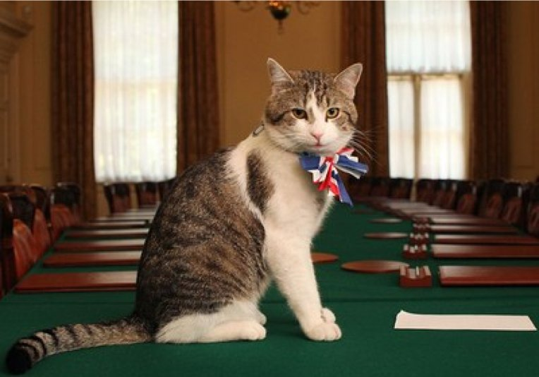 #PMQs Cameron to resign. Larry the cat to stay. So for a few minutes this afternoon the UK will be run by a cat? https://t.co/lSY5SrCVLL