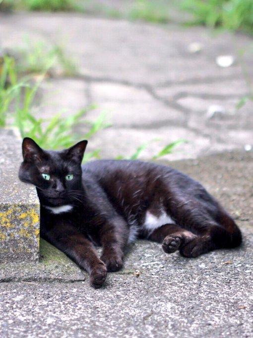 猫 画像 cat image パンティ猫が大声で叫ぶ