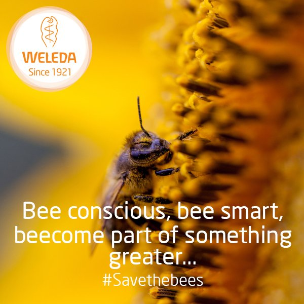 Because without them who knows where we would BEE! #savethebees https://t.co/jOMsKdB6sm