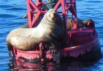 Spotted male & female Calif Sea Lion on cruise in Long Beach Harbor! https://t.co/9qeeQXjg6L https://t.co/2NiTTPyK0P