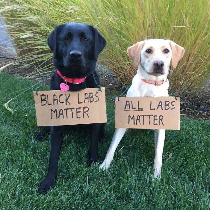 Ann coulter on twitter all labs matter
