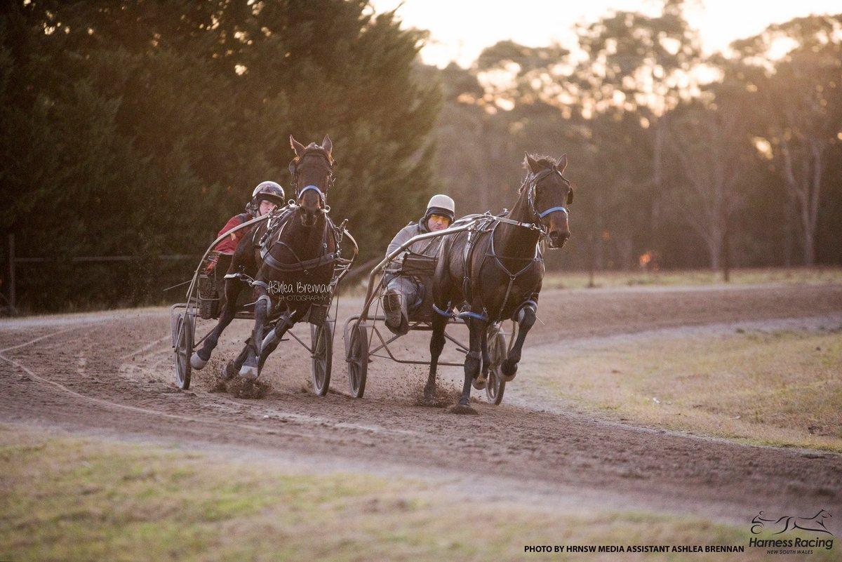 harness racing nsw on twitter: