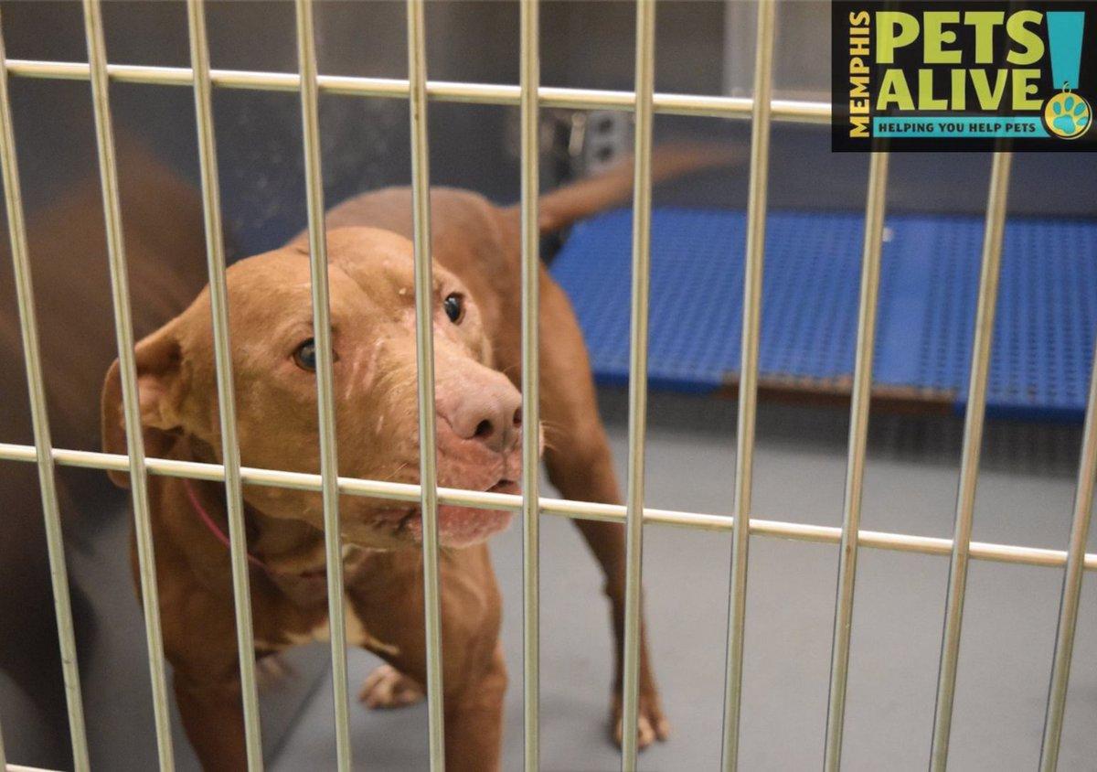 Memphis animal shelter