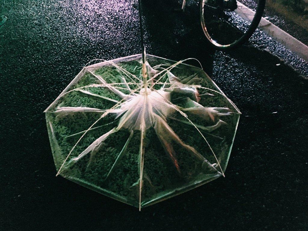 不思議な形の傘がいた https://t.co/UO3xMsc1KN
