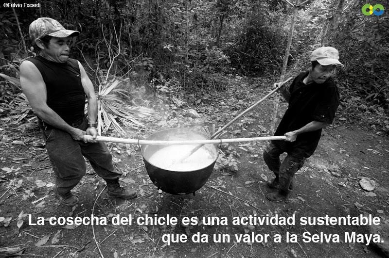 """Resultado de imagen para náhuatl """"tzictli"""""""