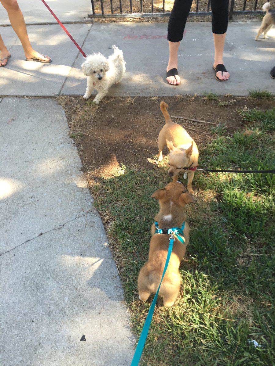 Ricky Dillon On Twitter Also Oliver Made Some New Friends On His