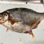 衝撃なんですけど魚を1匹買っただけなのに本当は31匹だった!?