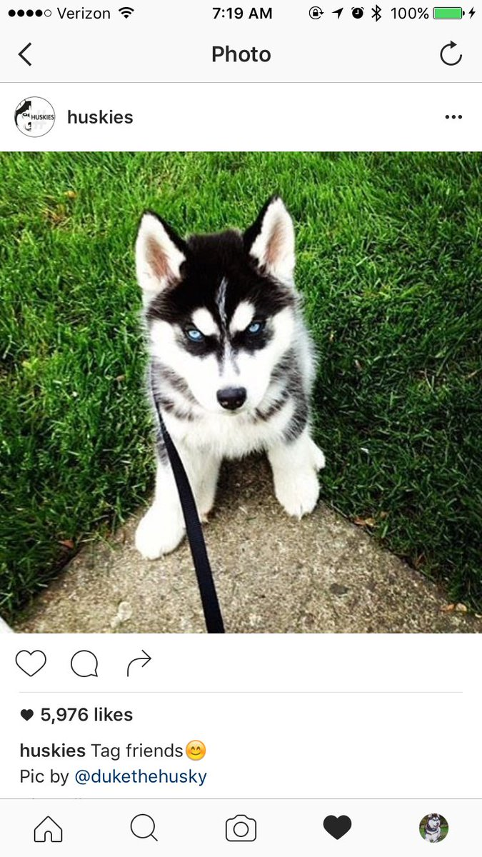 Duke The Husky On Twitter When You Wake Up And See A Famous Instagram Account Posted Your Baby Picture