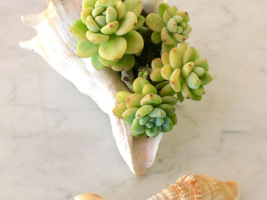 Hobbies: Turn seashells into nautical succulent planter