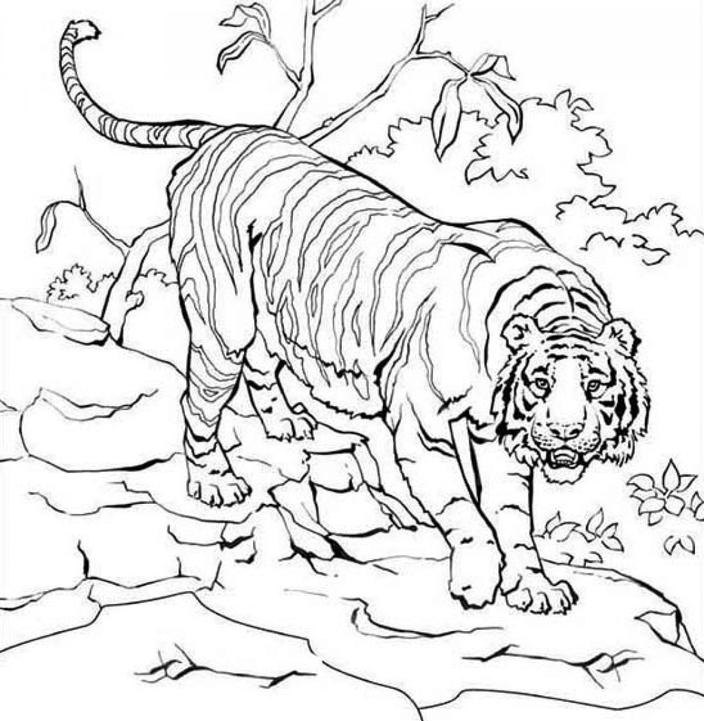 animal habitat coloring pages amazing coloring pages of sea