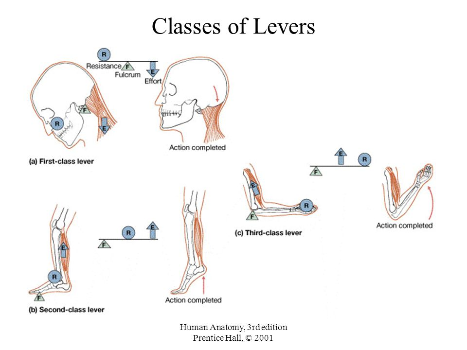 Atc Boc Study Guide On Twitter The Three Classifications Of Levers