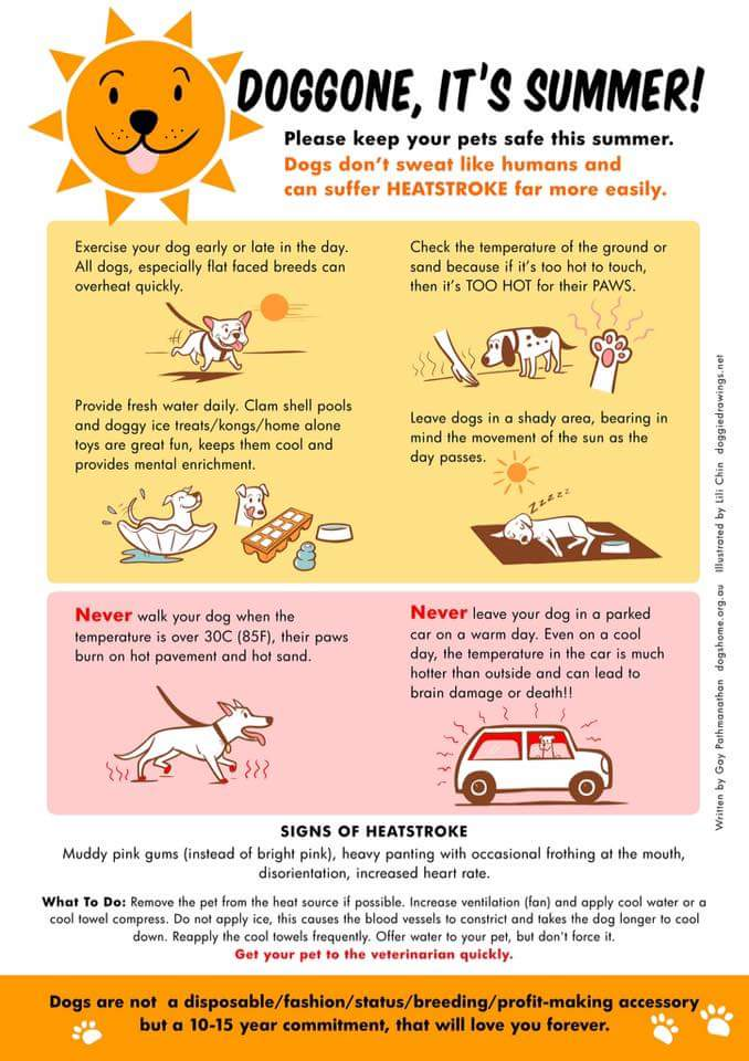 Hot weather is finally here. But remember our little friends aswell