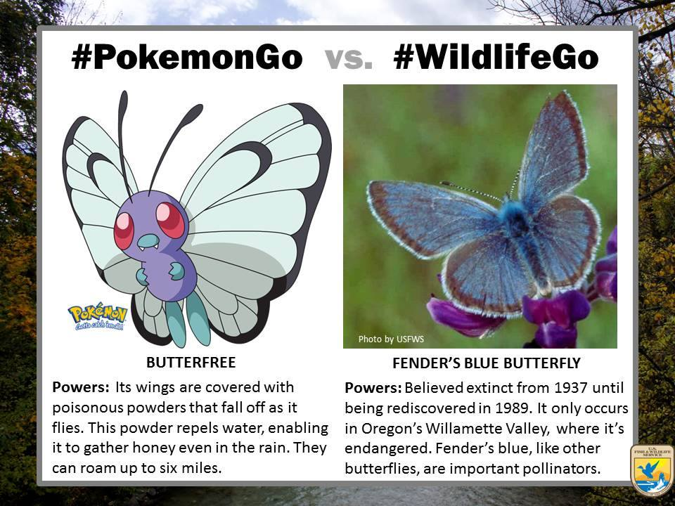 Forget about finding Butterfree in #PokemonGo! Start looking for the really elusive Fender's blue butterfly #USFWS https://t.co/frBSnaZeLr