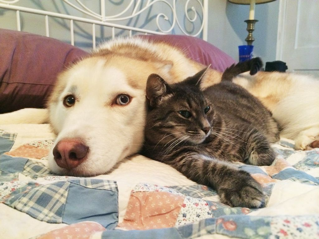 Картинки котов и собак прикольные