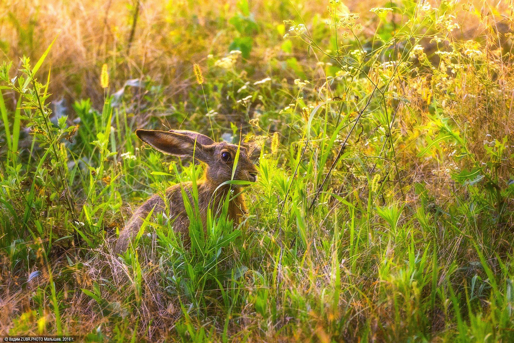 александровский лес ростовская область фото родов она принялась