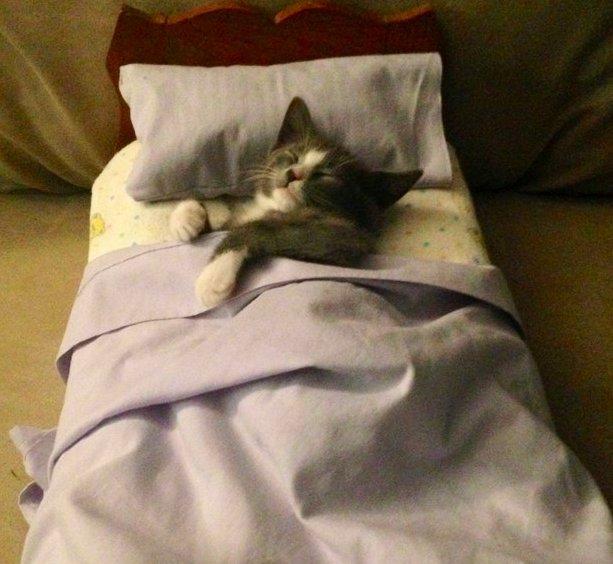 Анимашки блестяшки, прикольные картинки котики в кроватке
