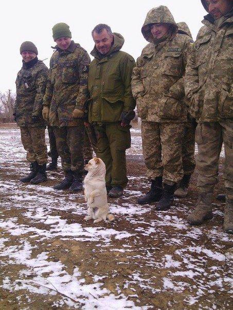 Наши позиции под Авдеевкой и Майорском обстреляны из 120-мм минометов, - пресс-центр штаба АТО - Цензор.НЕТ 360