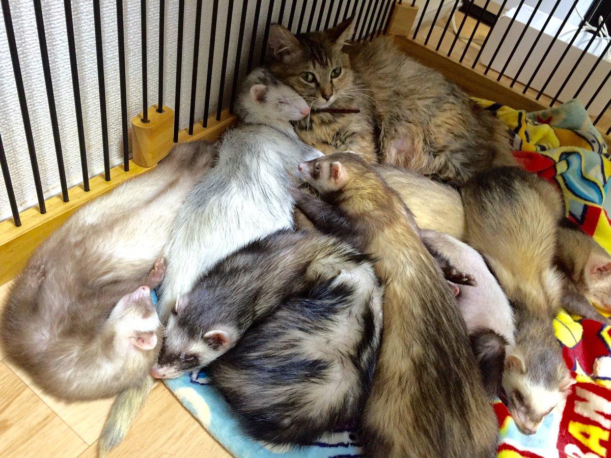 みんな仲良く寝てるなぁと思って写真撮ったら、なんか1組だけ雰囲気違ってカメラ向けたらラブ充見せつけられたんだけどなんなのこのカップルかわいすぎか。 pic.twitter.com/k6pbq8tcqZ