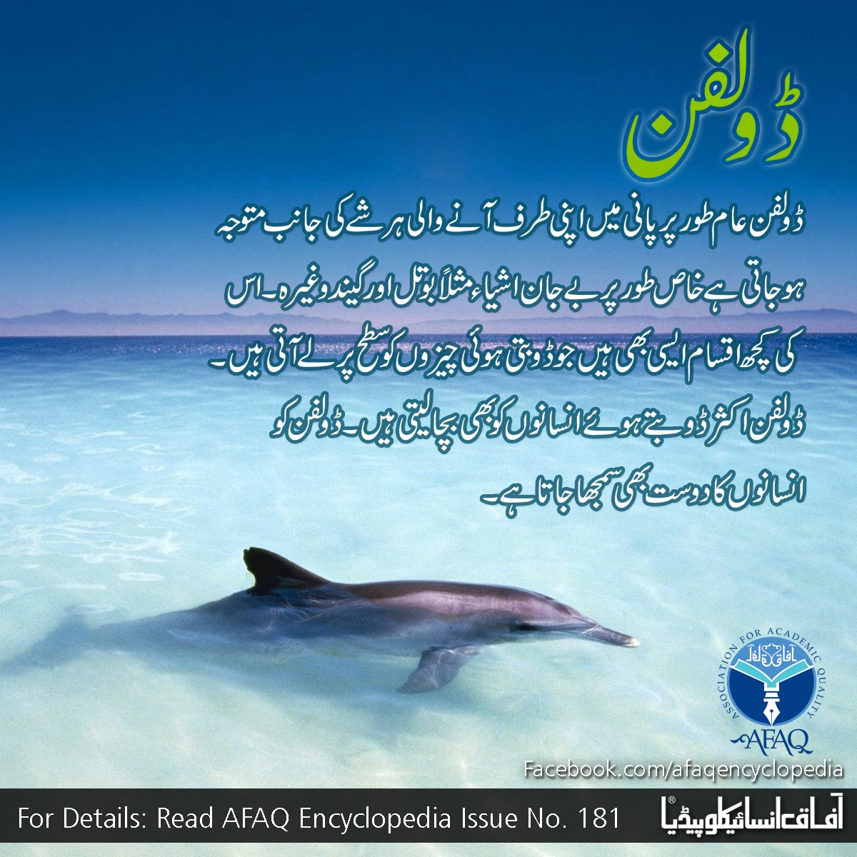 Dolphin Details | Afaq On Twitter For More Details About Dolphin Read Afaq