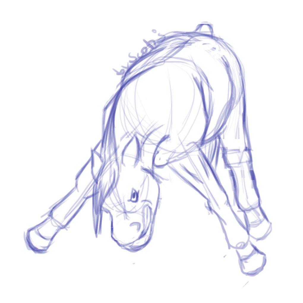 Les poneys de Scotis Co-BaB0XEAEo476