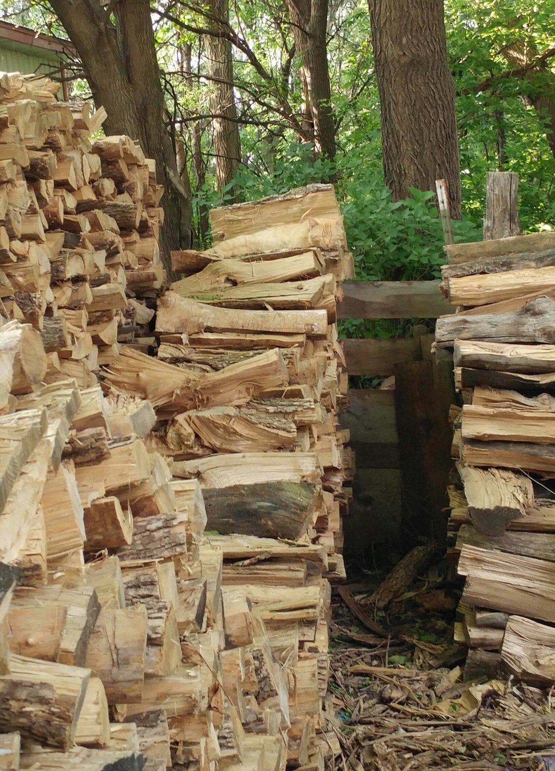кошка на картинке с дровами хоть