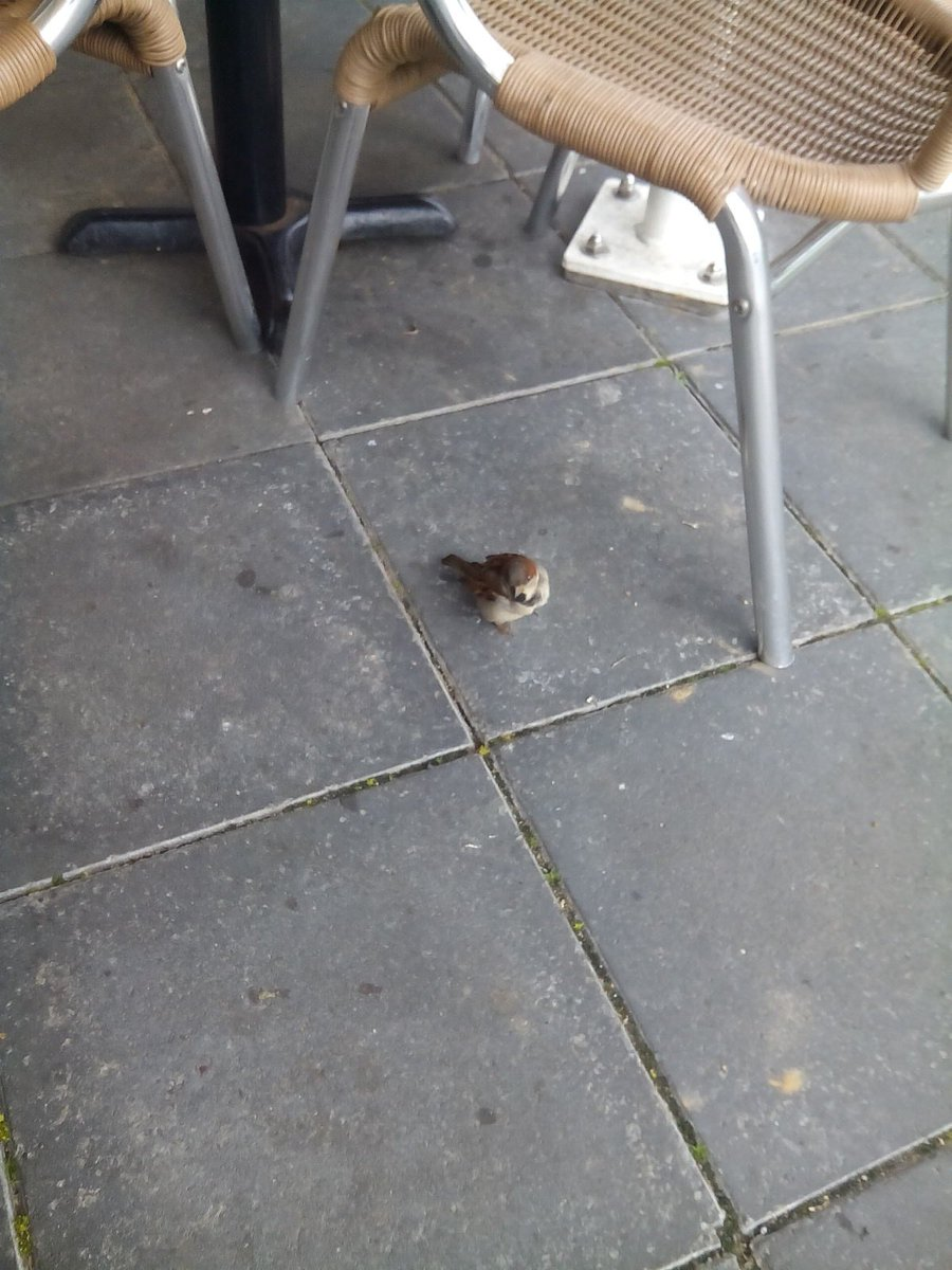 This little bird kept me company during lunch