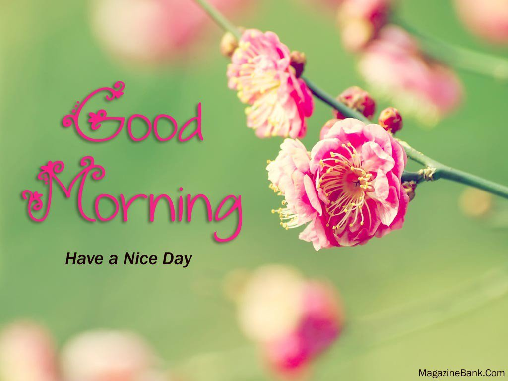 World Love Flowers On Twitter Good Morning Enjoy Your Day