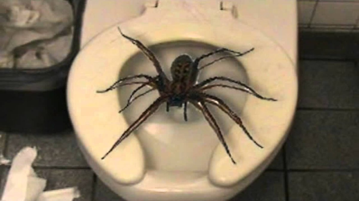 Pardon My Take On Twitter Olympic Update Member Of Switzerland Track Team Finds Giant Spider In Bathroom Https T Co Kxbhd8ogu8