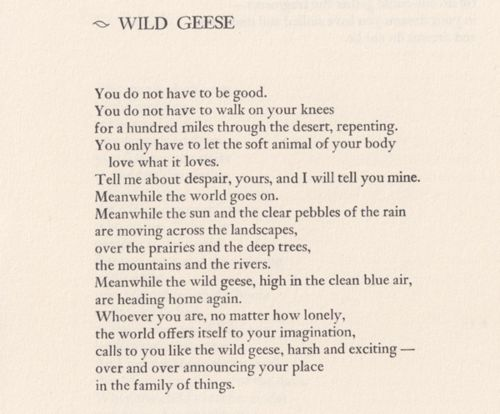 wild geese oliver the road not taken frost english 125 Start studying poetry final learn vocabulary  the road not taken frost wild geese oliver theme for english b langston hughes.
