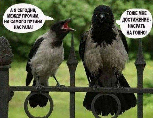 """""""Россия не намерена делать что-то внутри, чтобы угодить кому-то снаружи"""", - Песков отрицает возможную отставку правительства Медведева - Цензор.НЕТ 8026"""