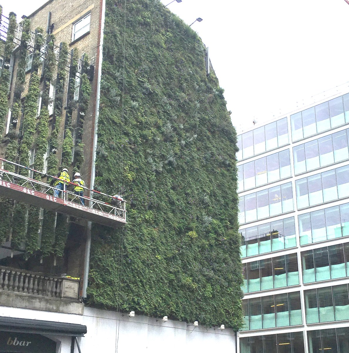 Vegetated versus glass facades. Maintenance by @seagramking of Rubens at the Palace Hotel https://t.co/3kAHdLw04X