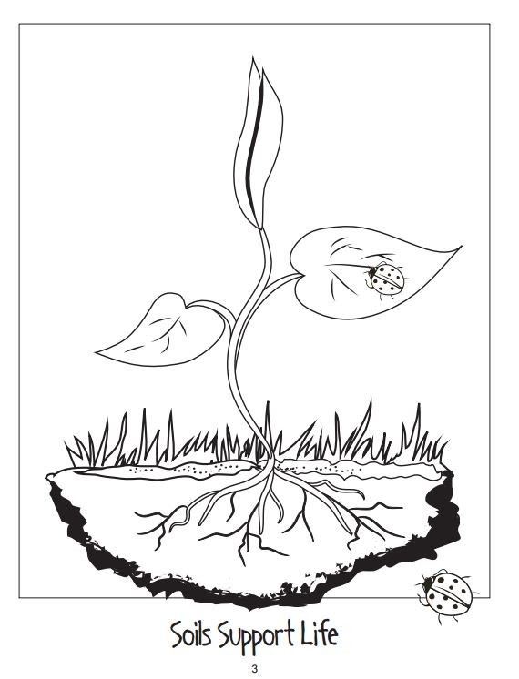 Soil Science Society On Twitter Happy National Coloring Book Day